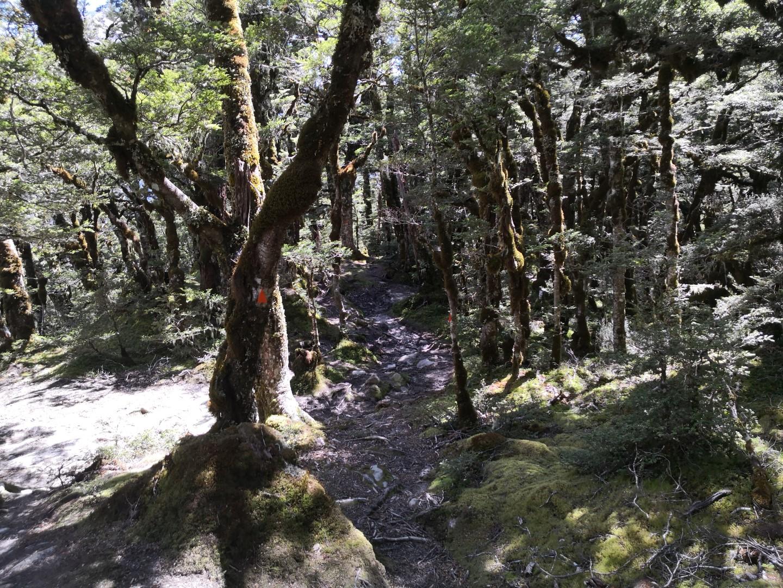 Mount Brewster