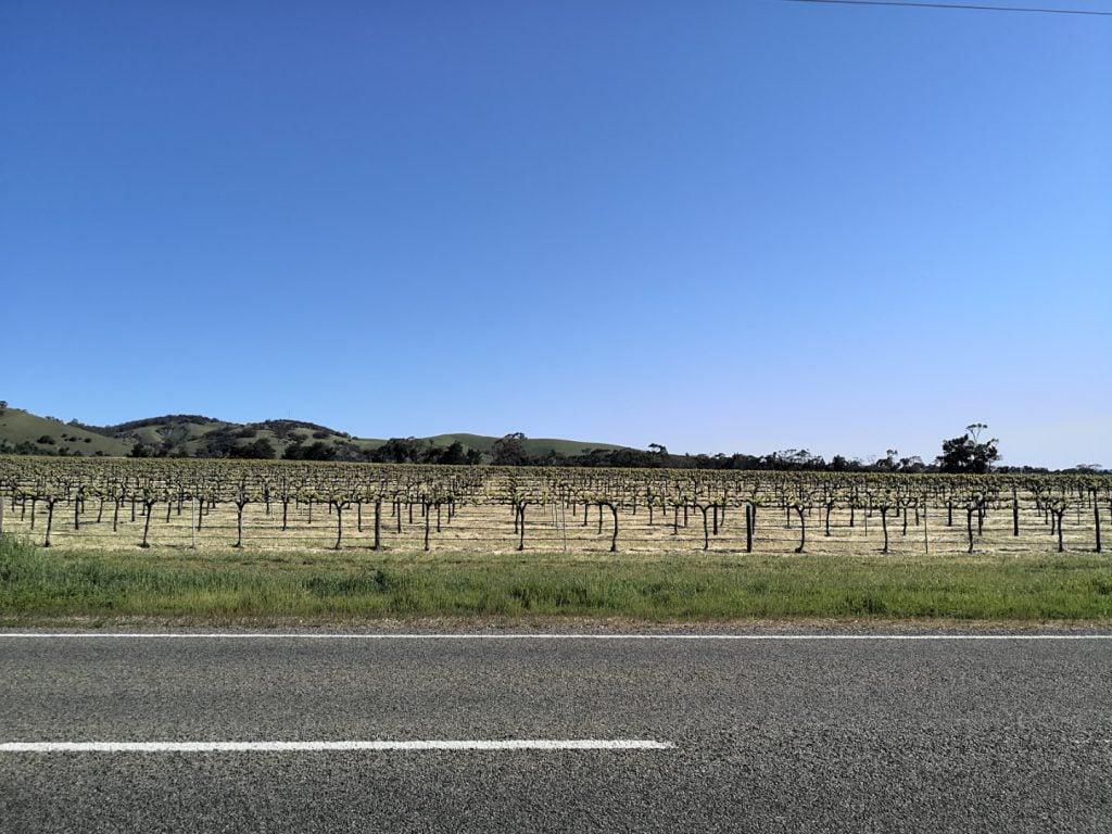 יין באוסטרליה